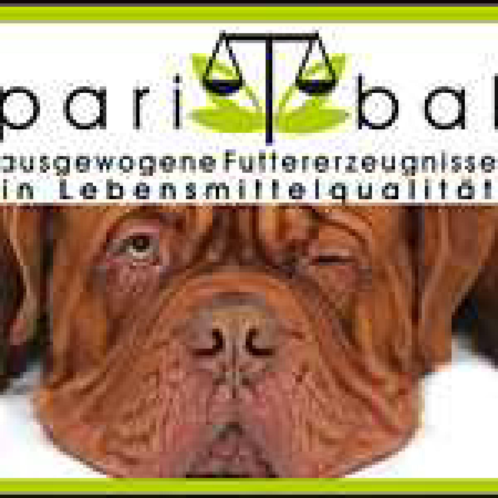 banner_paribal