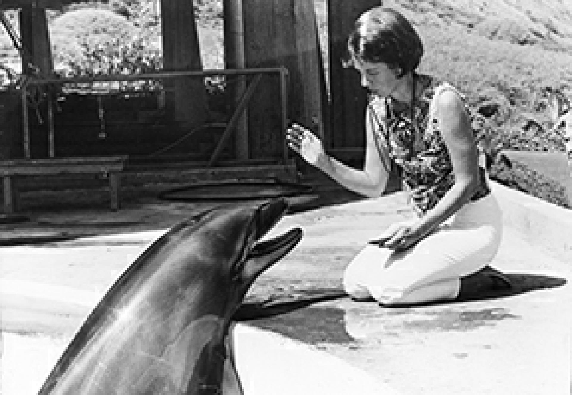 Karen Pryor und Delphin