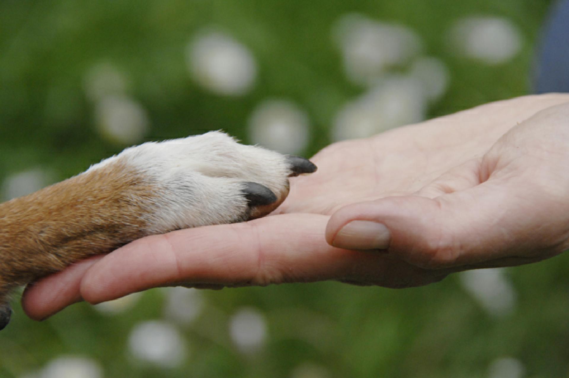 hund verletzt hund