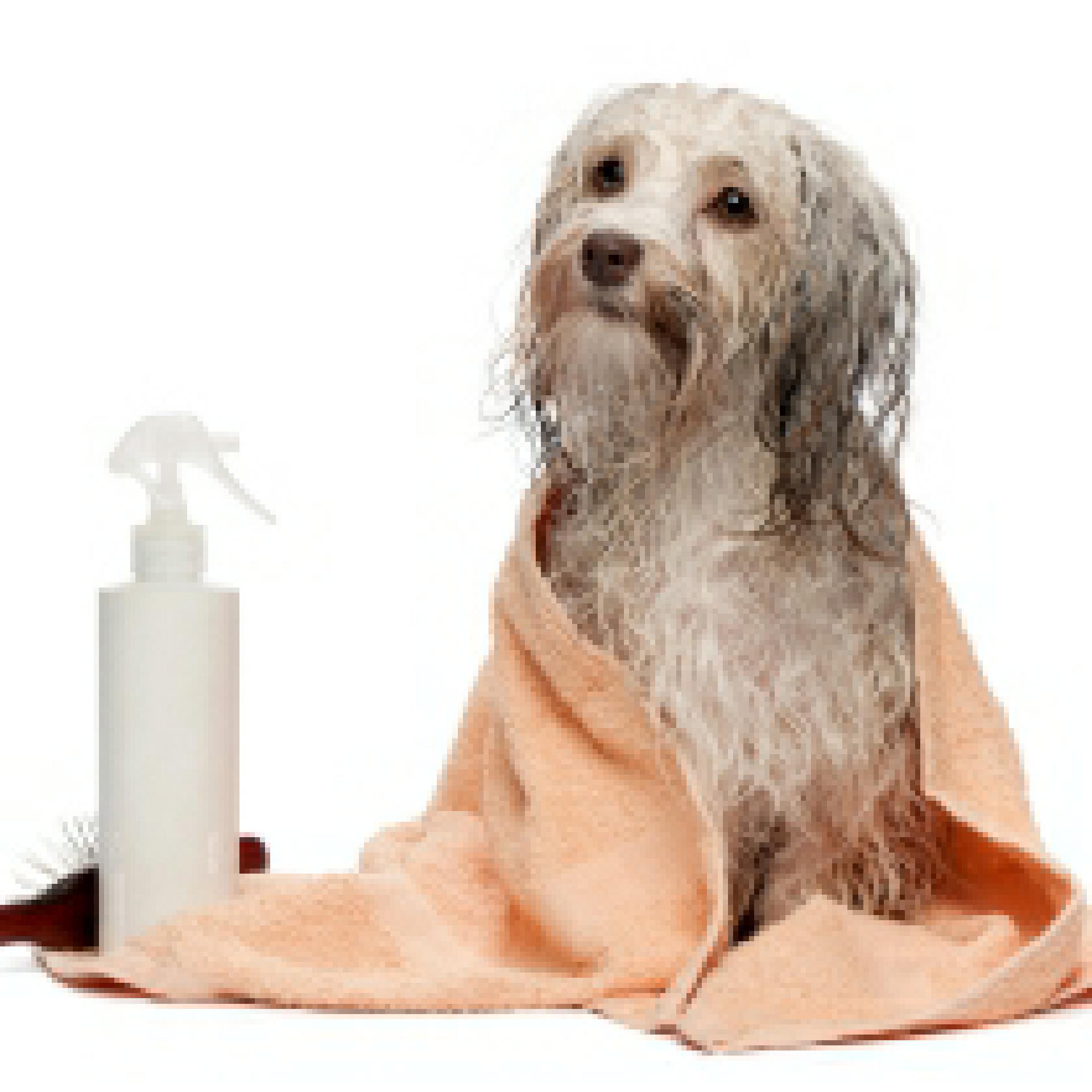 waffen gegen hunde