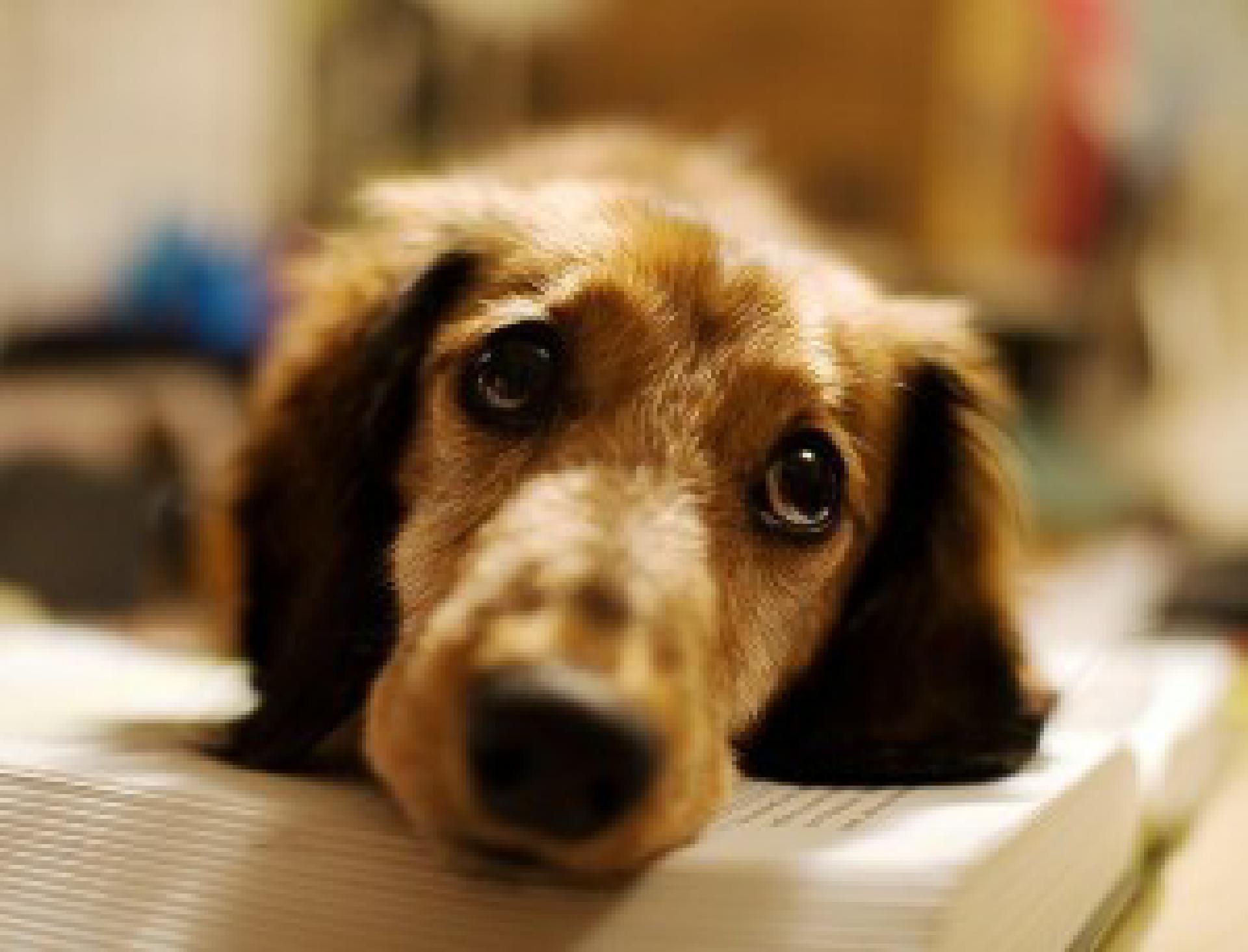 Zuviel alleingelassen werden kann bei Hunden großen Stress auslösen