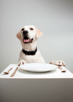 dog-at-table