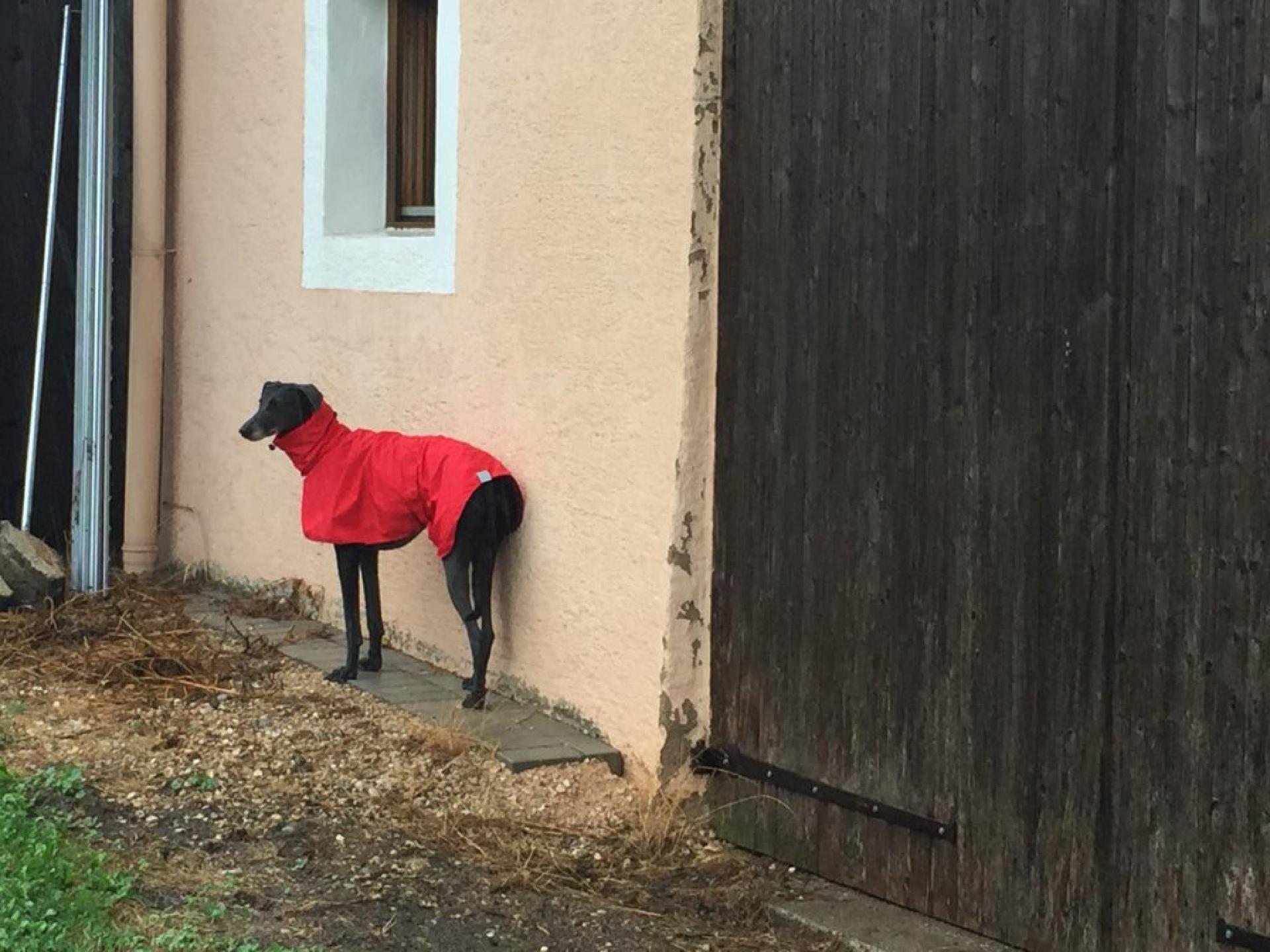 Manche Hunde schätzen Regen und Matsch
