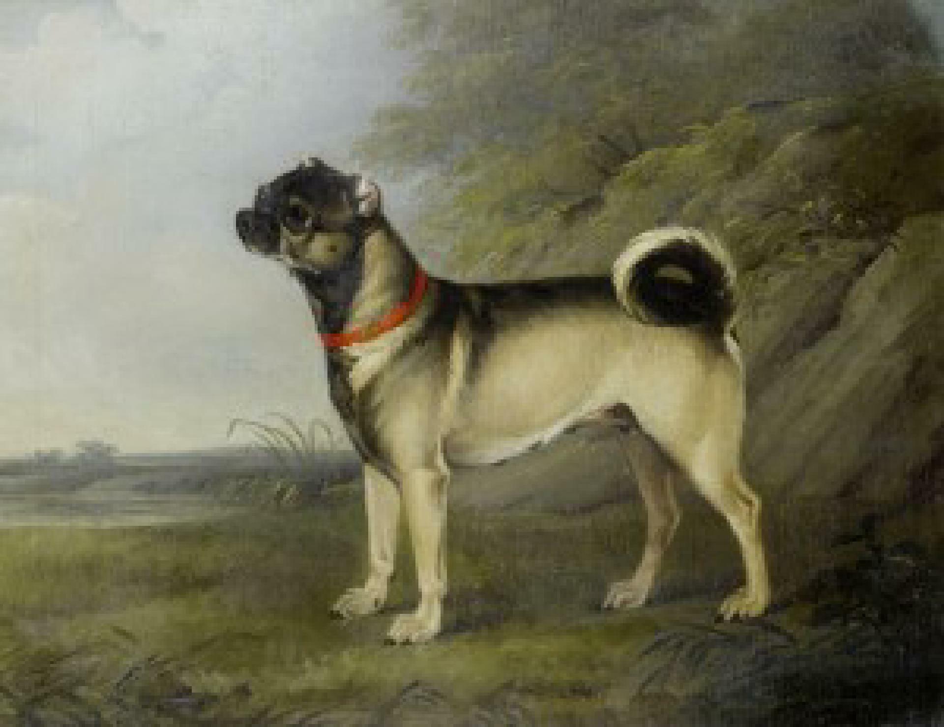A favourite Pug bitch (1802) Henry Bernard Chalon (1770–1849) oil on canvas (51 × 60 cm