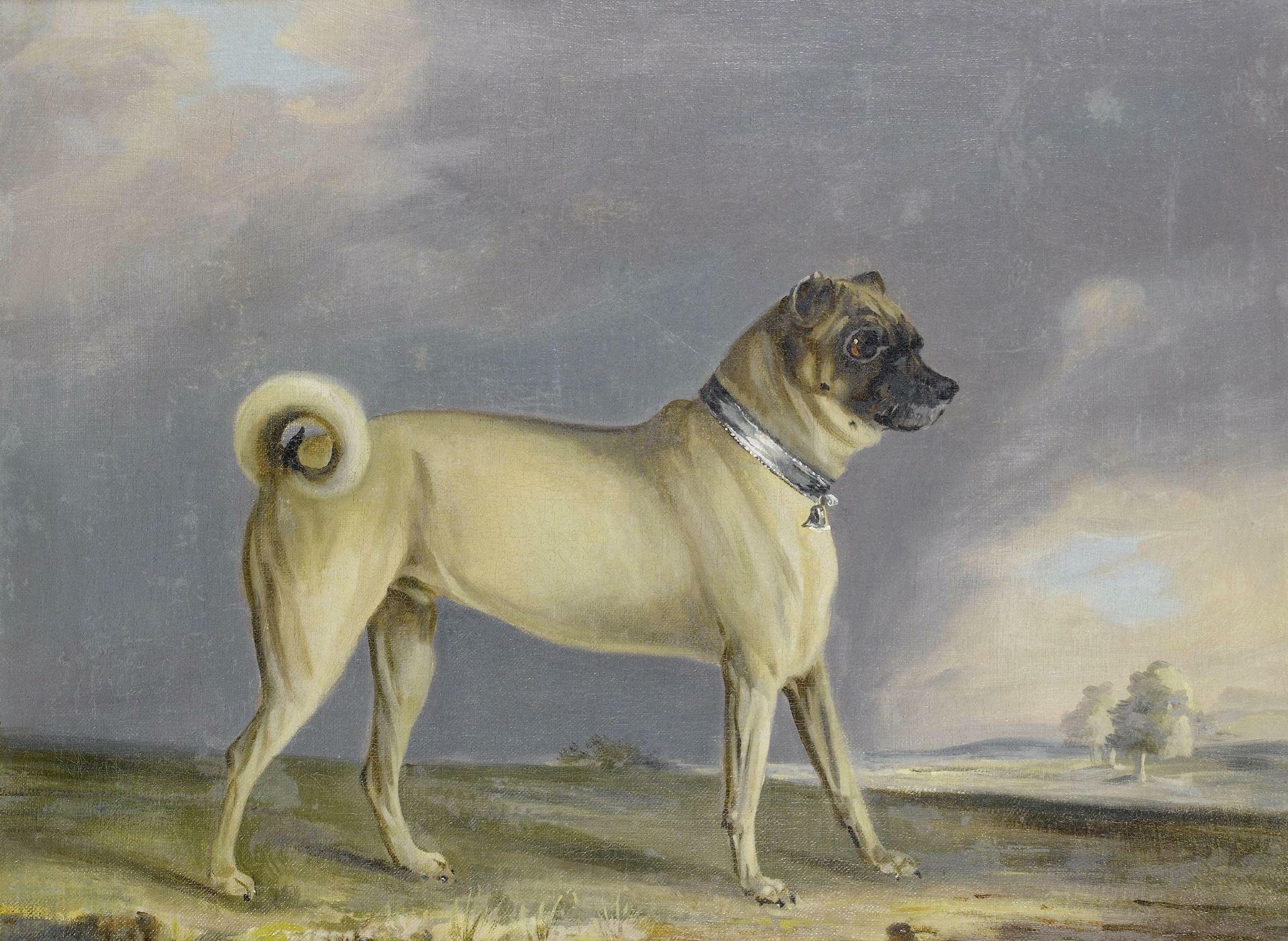 A Pug dog (1802) Henry Bernard Chalon (1770–1849) oil on canvas (51 × 60 cm