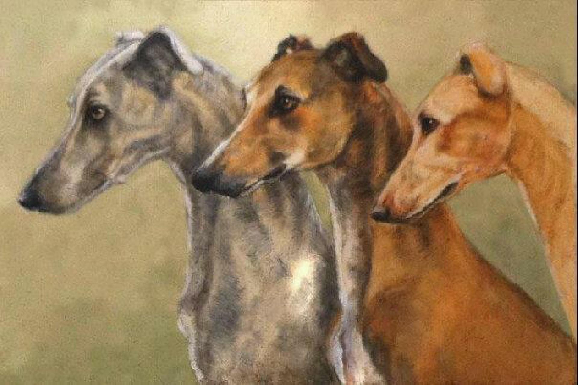 Greyhounds - Lucilla Bollati