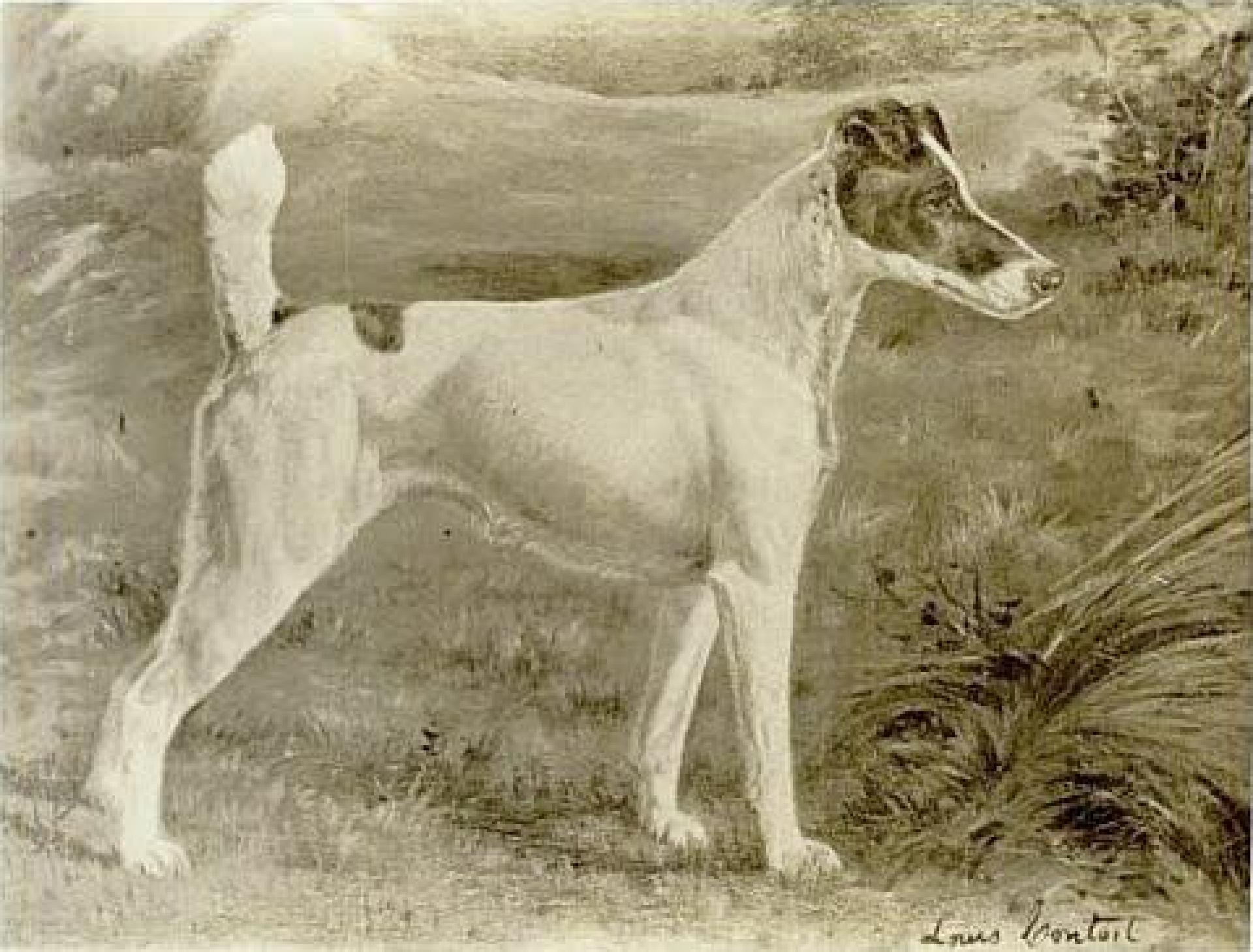 Painting of Warren Remedy, Fox Terrier. First best in show winner at the Westminster Kennel Club Dog show, and the only dog to have won that prize on three occasions. Artist is Gustav Muss-Arnolt, who died in 1927