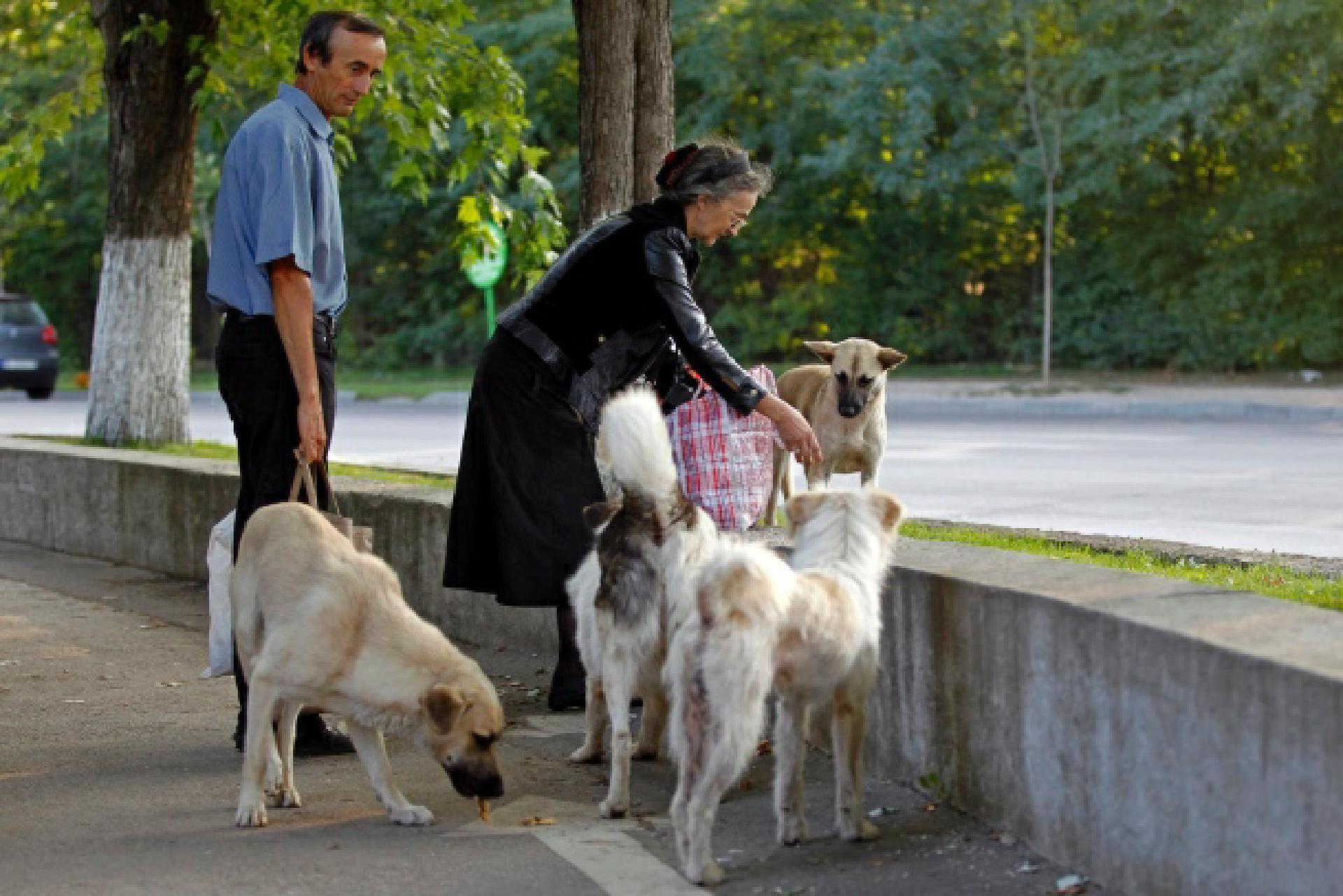 © REUTERS In einem Park in Bukarest: Anwohner füttern streunende Hunde.