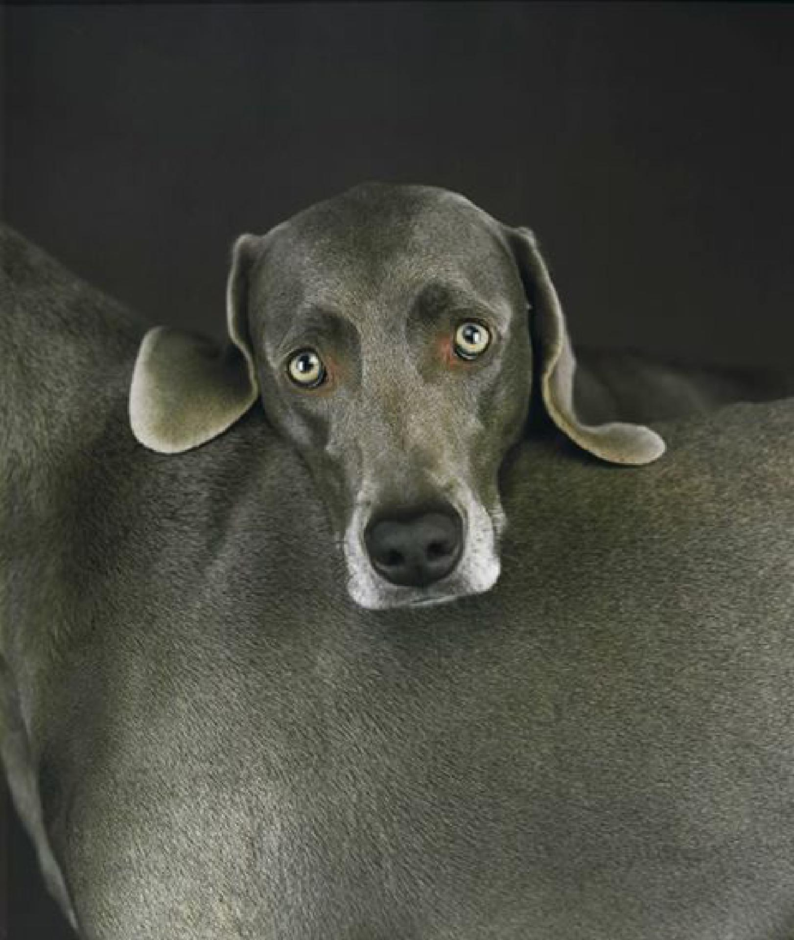 Foto: William Wegman