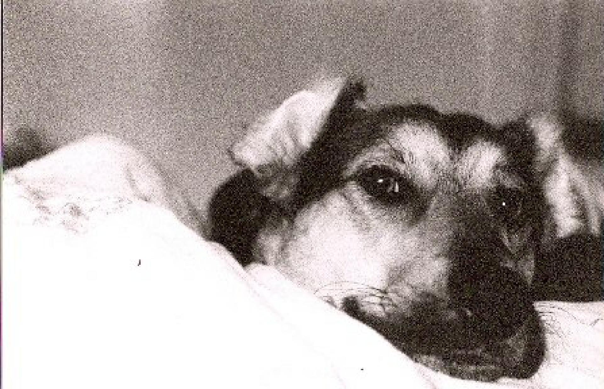 Schoep in seiner ersten Nacht bei John Unger Foto: J. Unger