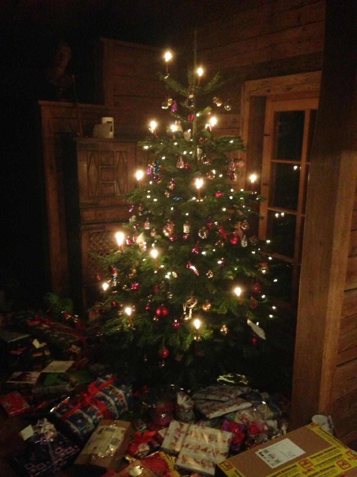 Typischer Leyen'scher Weihnachtsbaum ohne jungen Hund im Haus