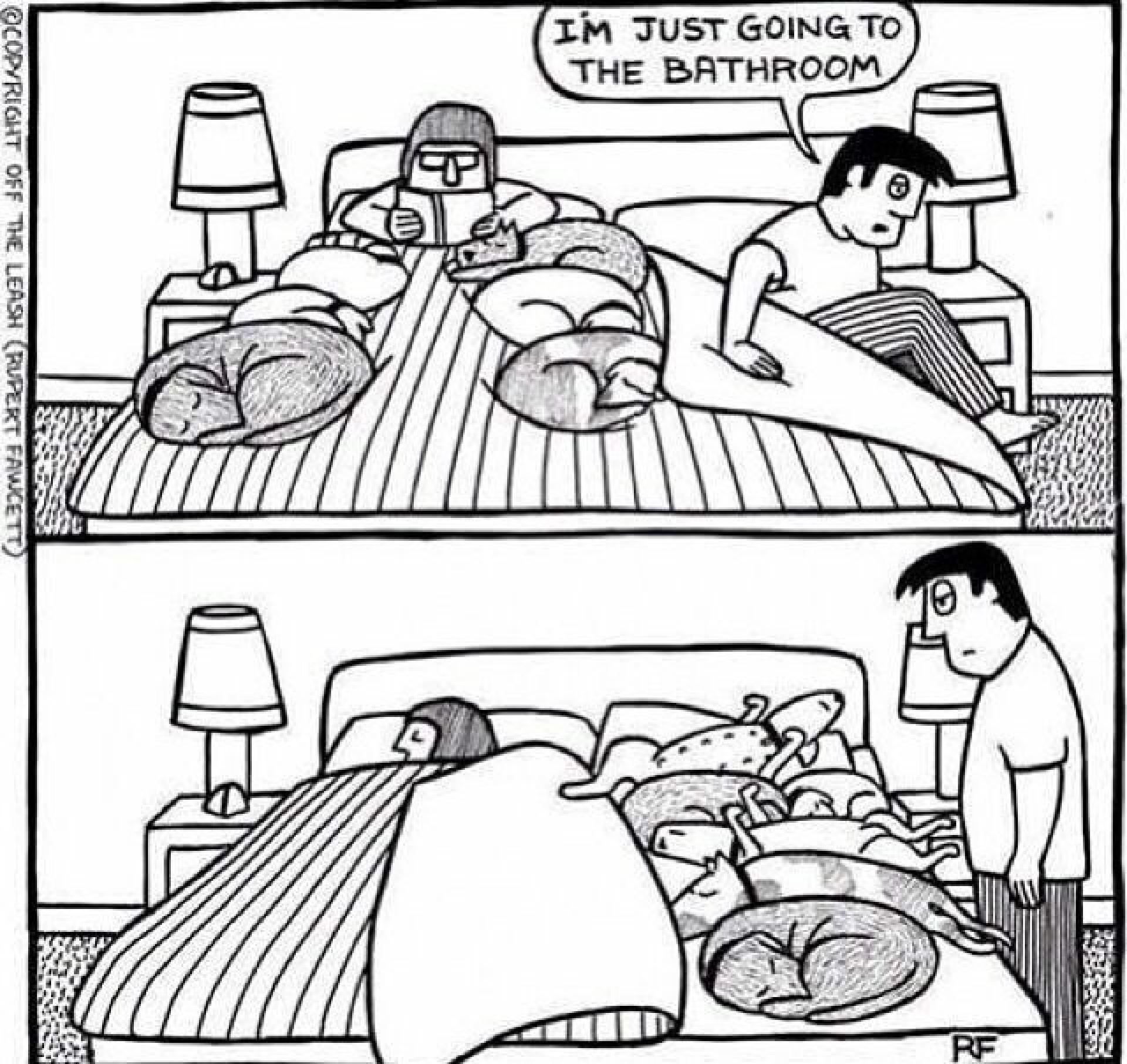 Hunde Im Bett Das Problem Lumpi4 De Hundemagazin