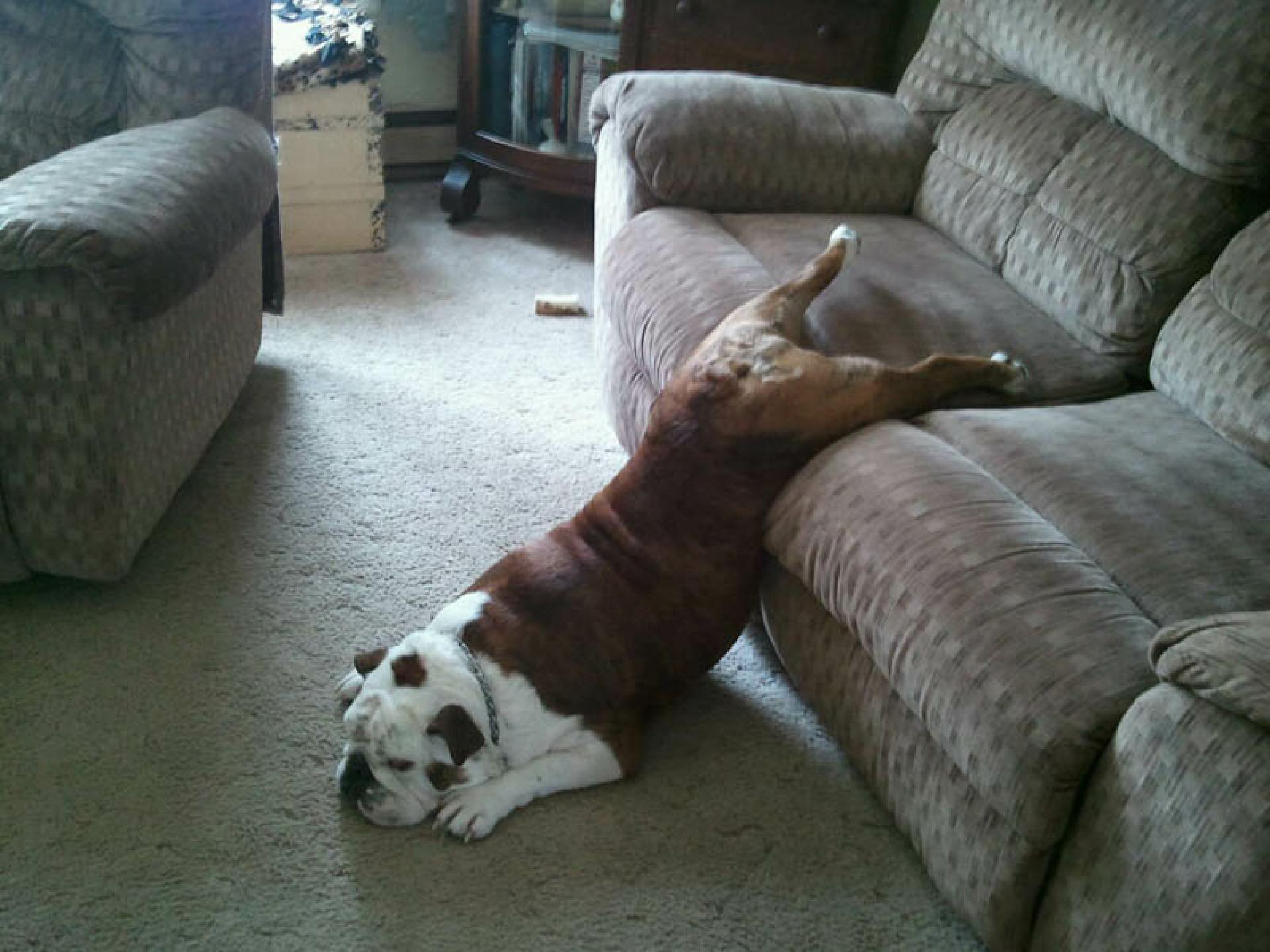 dog-sleeping-on-ground-and-couch-funny-2