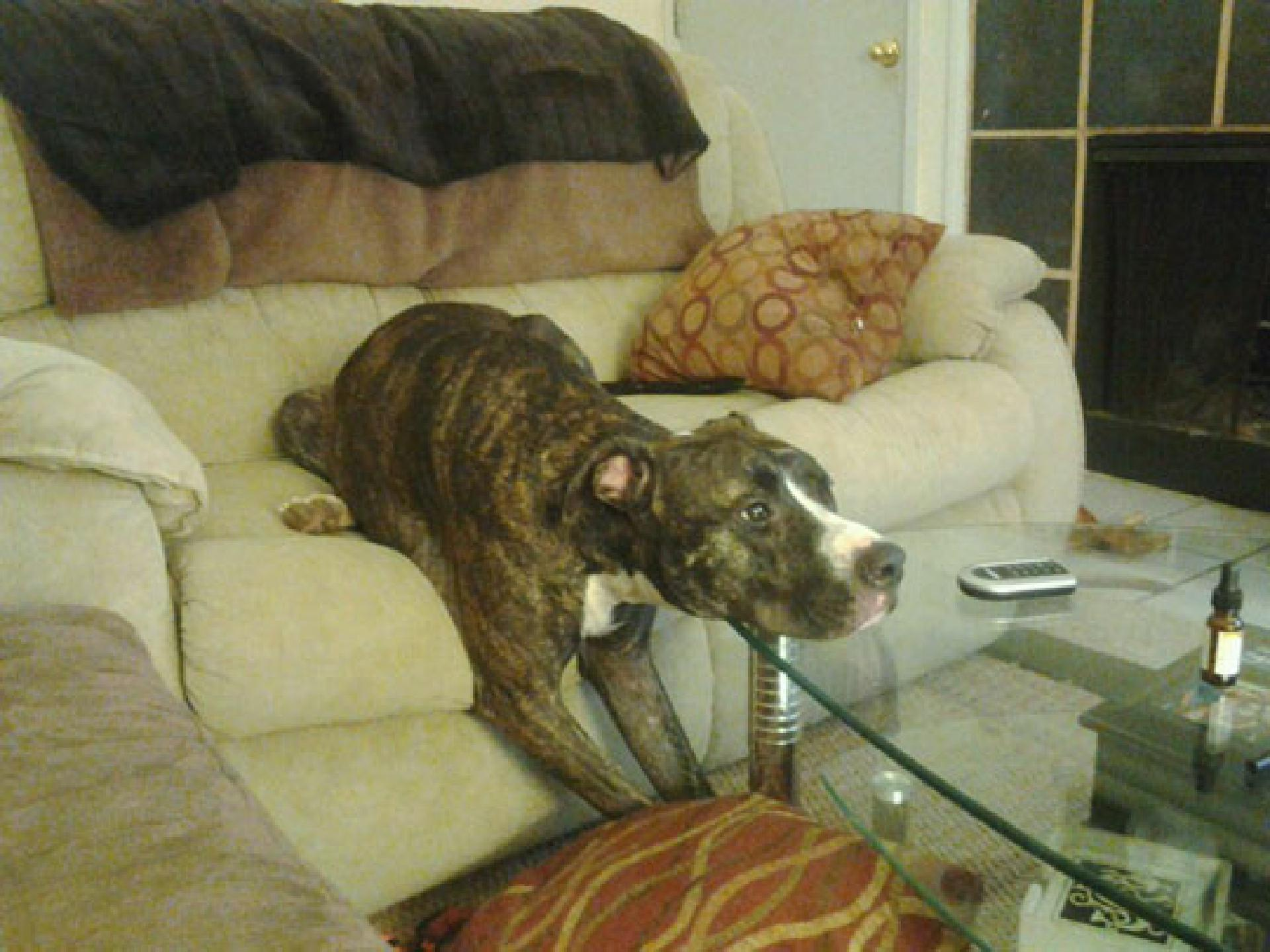 funny-dog-watching-TV-couch
