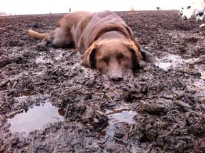 Sehr bleibt bei Hunden: Das Matsch-Spiel