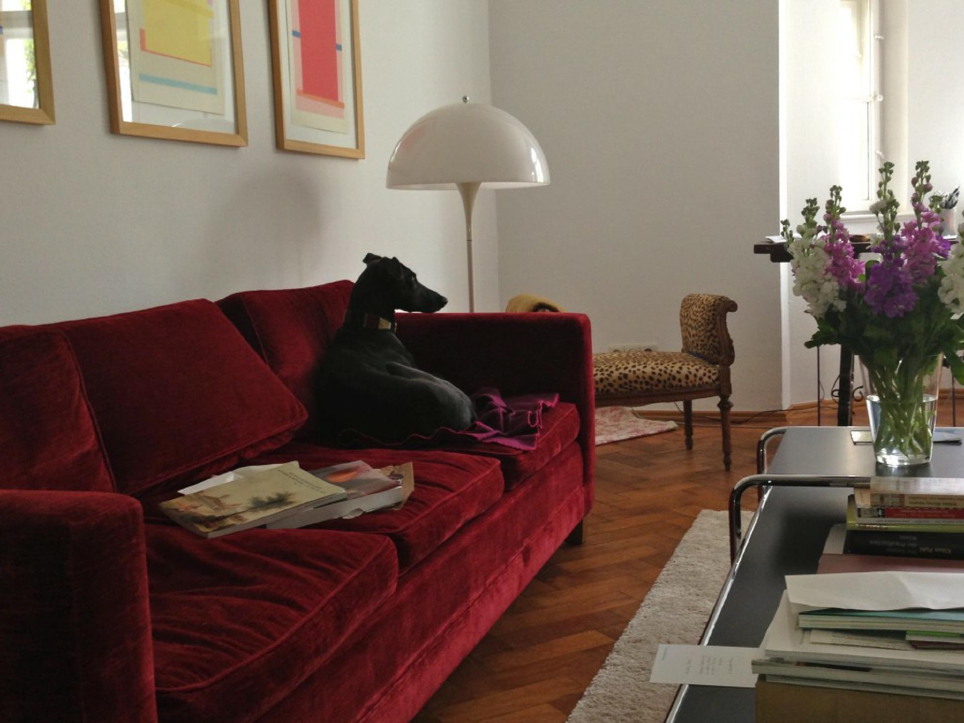 Wie schnell Hunde sich an Luxus gewöhnen: Egal, wo das Sofa steht - Hauptsache, es mit Samt bezogen, damit Monsieur sich besser in Szene setzen kann