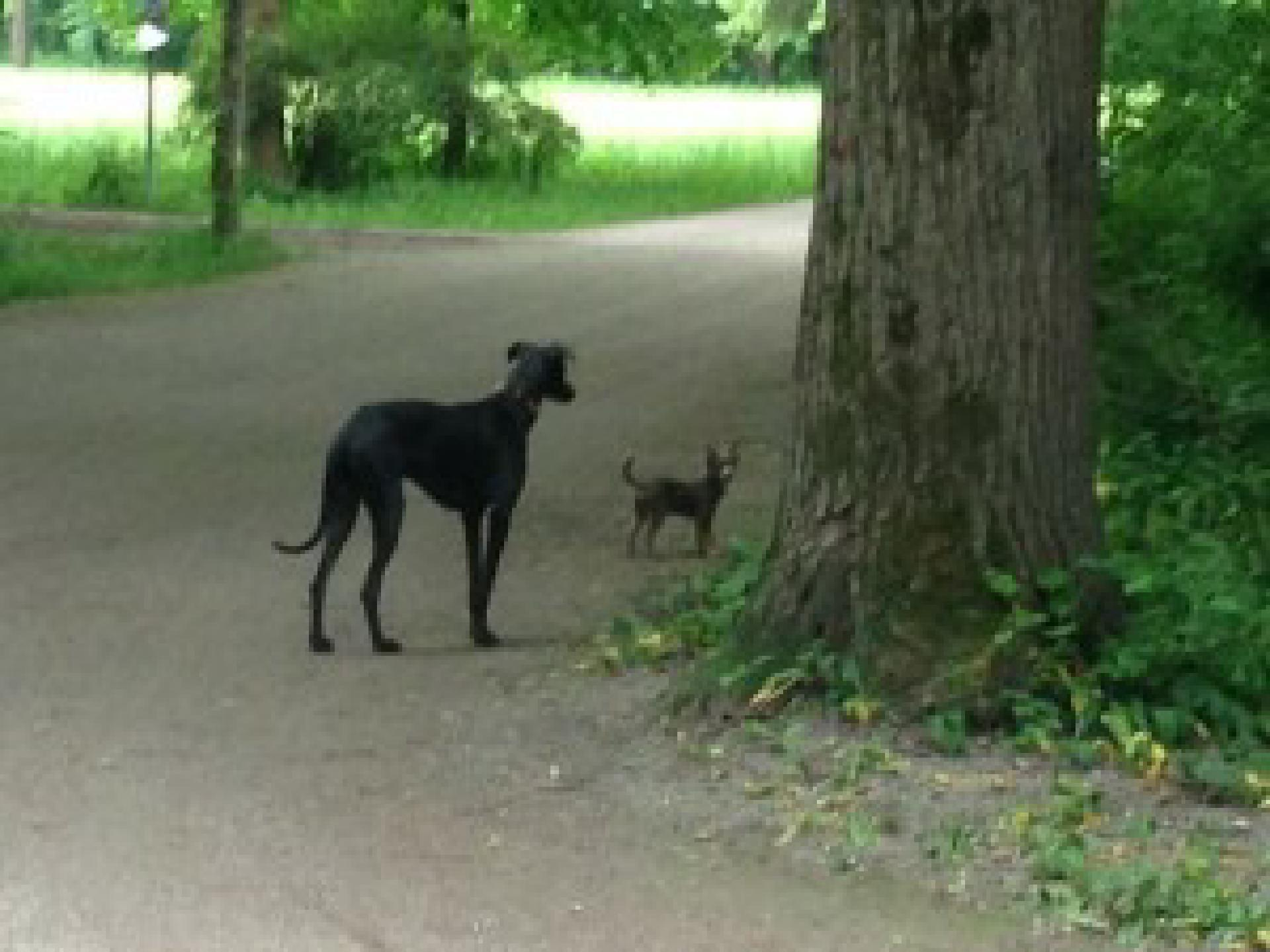 Nano konnte kaum fassen, in welchen Größen es Hunde gibt