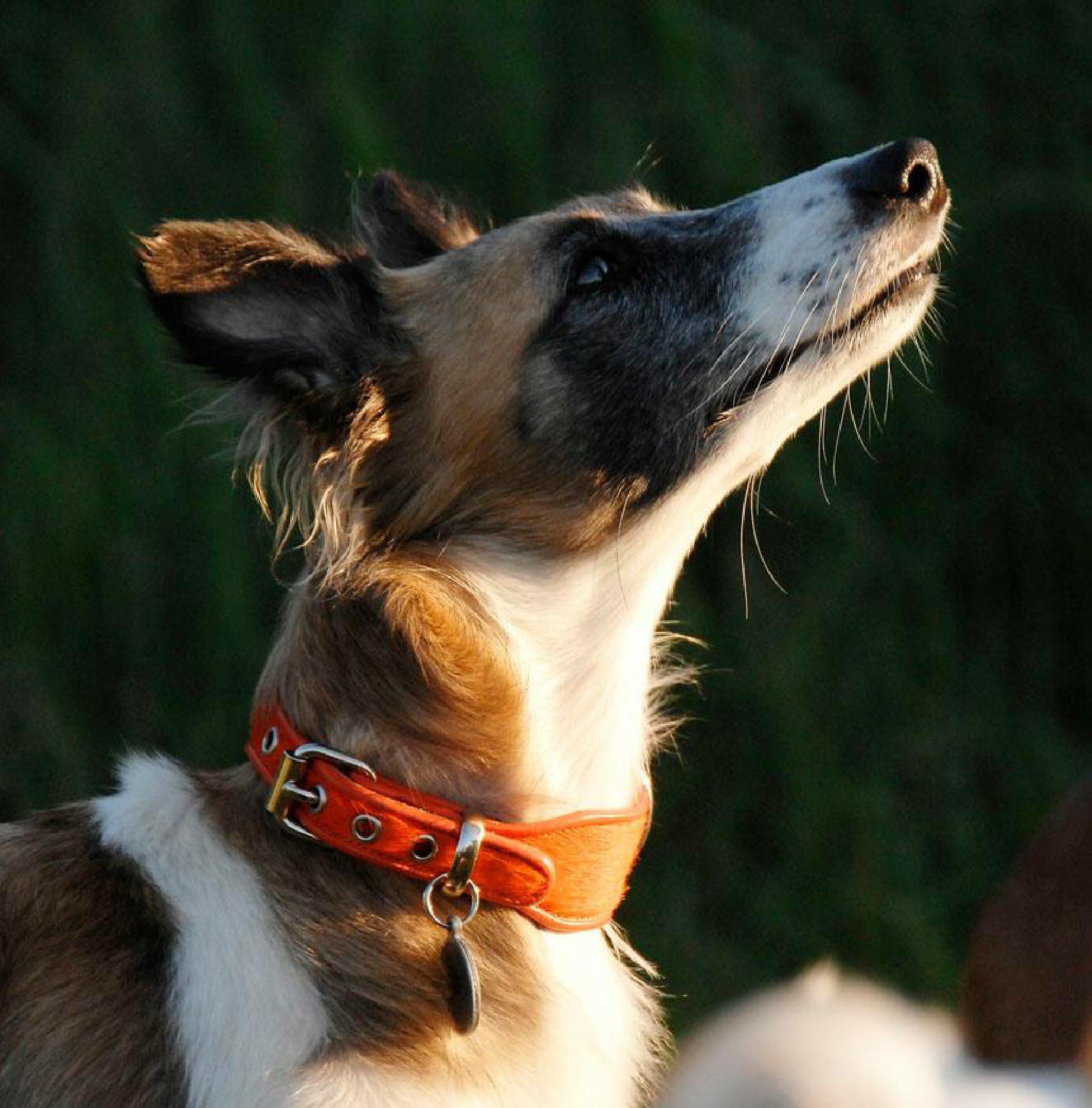 Wunderhund