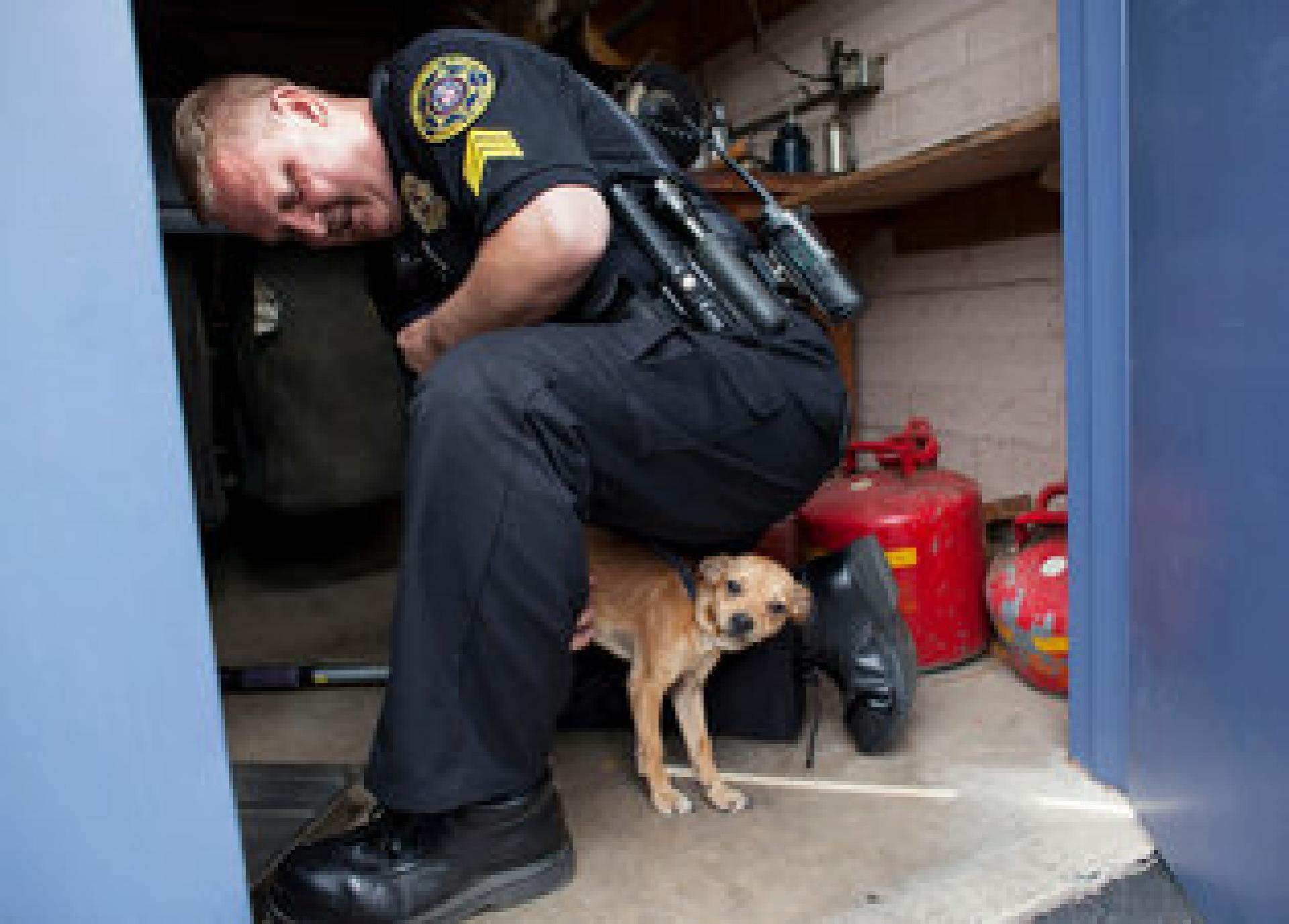 Sgt. True läßt einen streunenden Chihuahua-Mix aus einem Heizungsraum