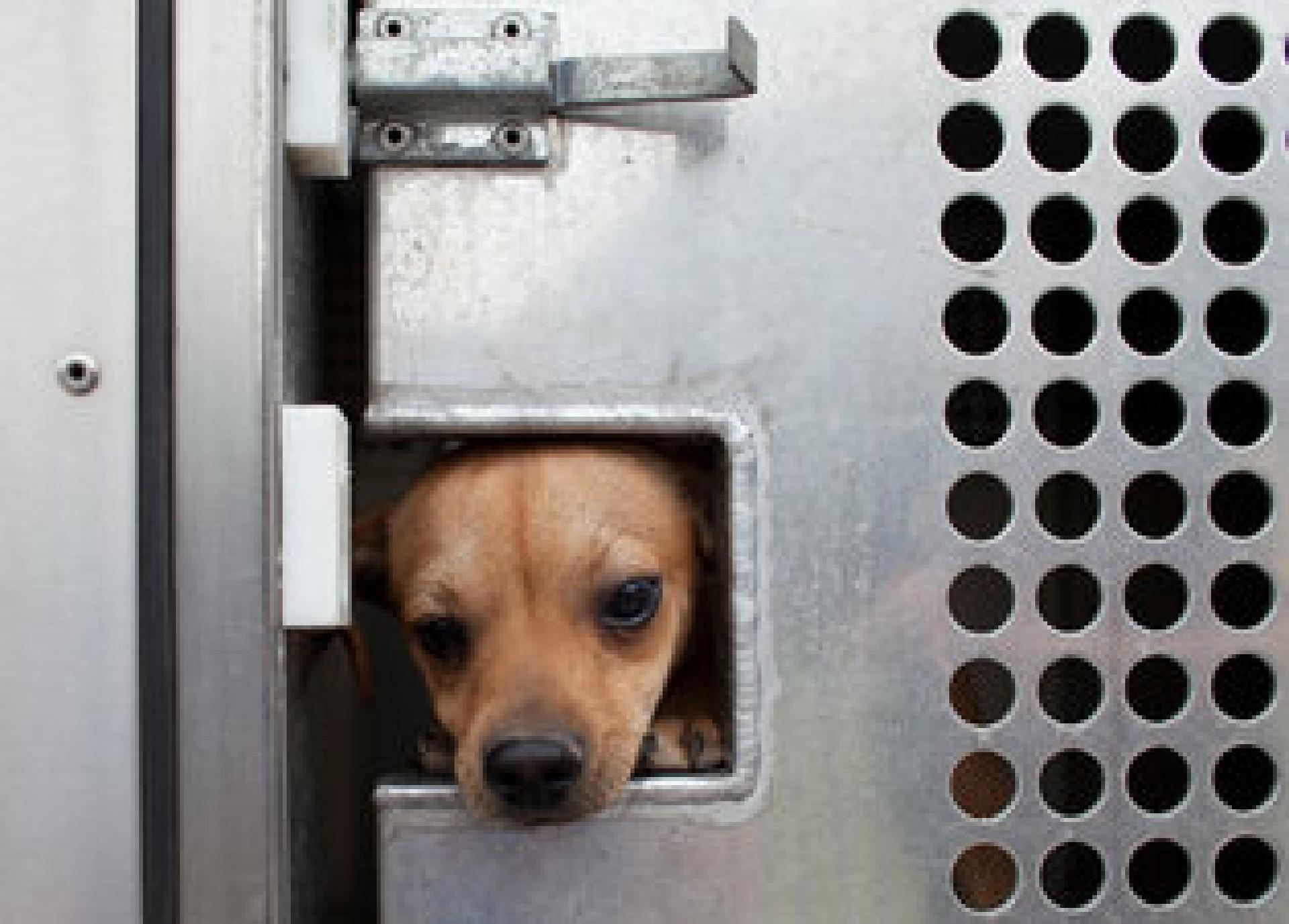 Auf dem Weg ins Tierheim - und irgendwann hoffentlich in ein besseres Leben