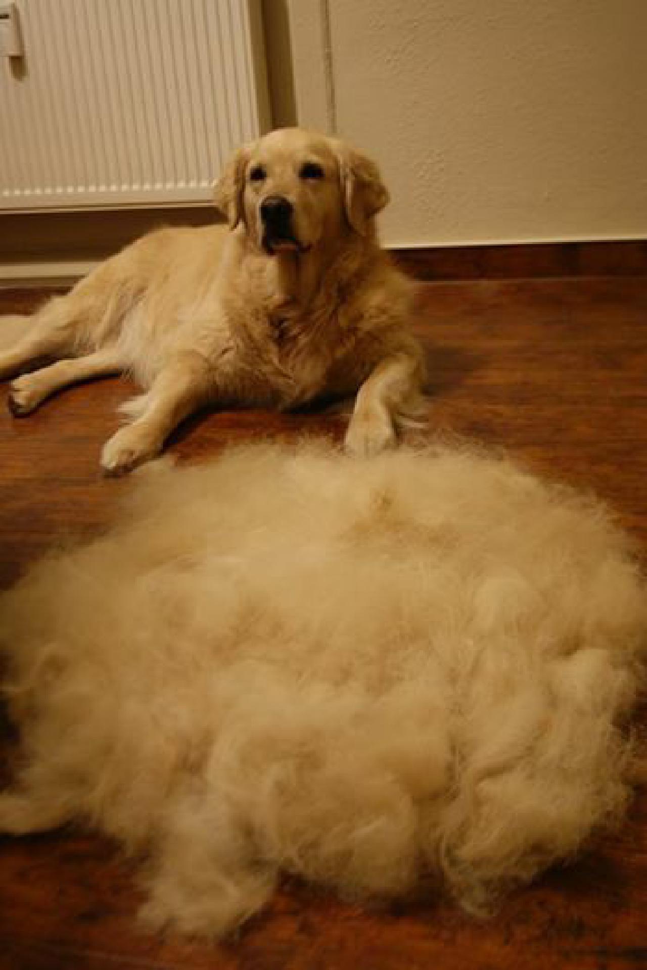 Für jeden Felltyp gibt es eine individuelle Fellpflege