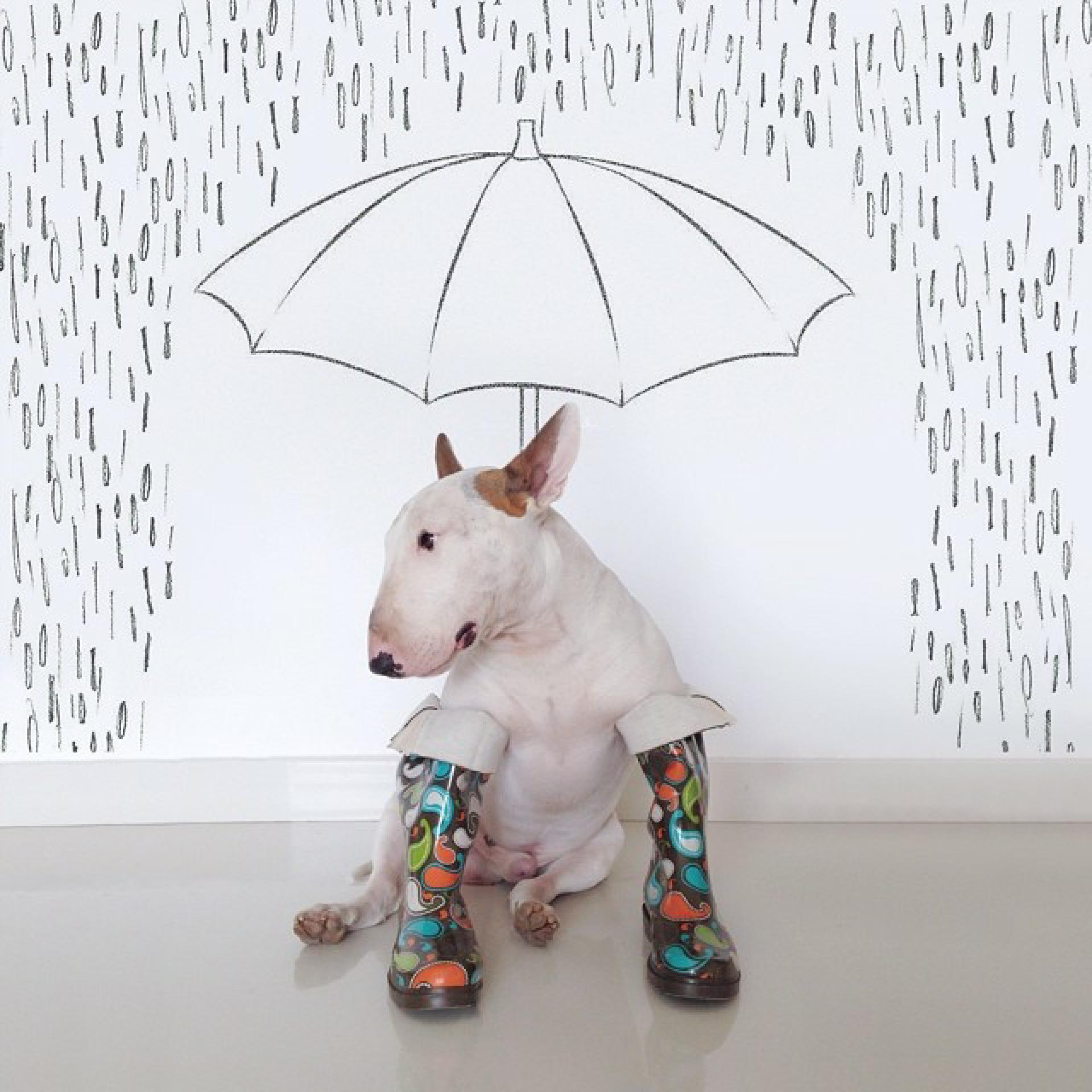 jimmy-choo-bull-terrier-illustrations-rafael-mantesso-10
