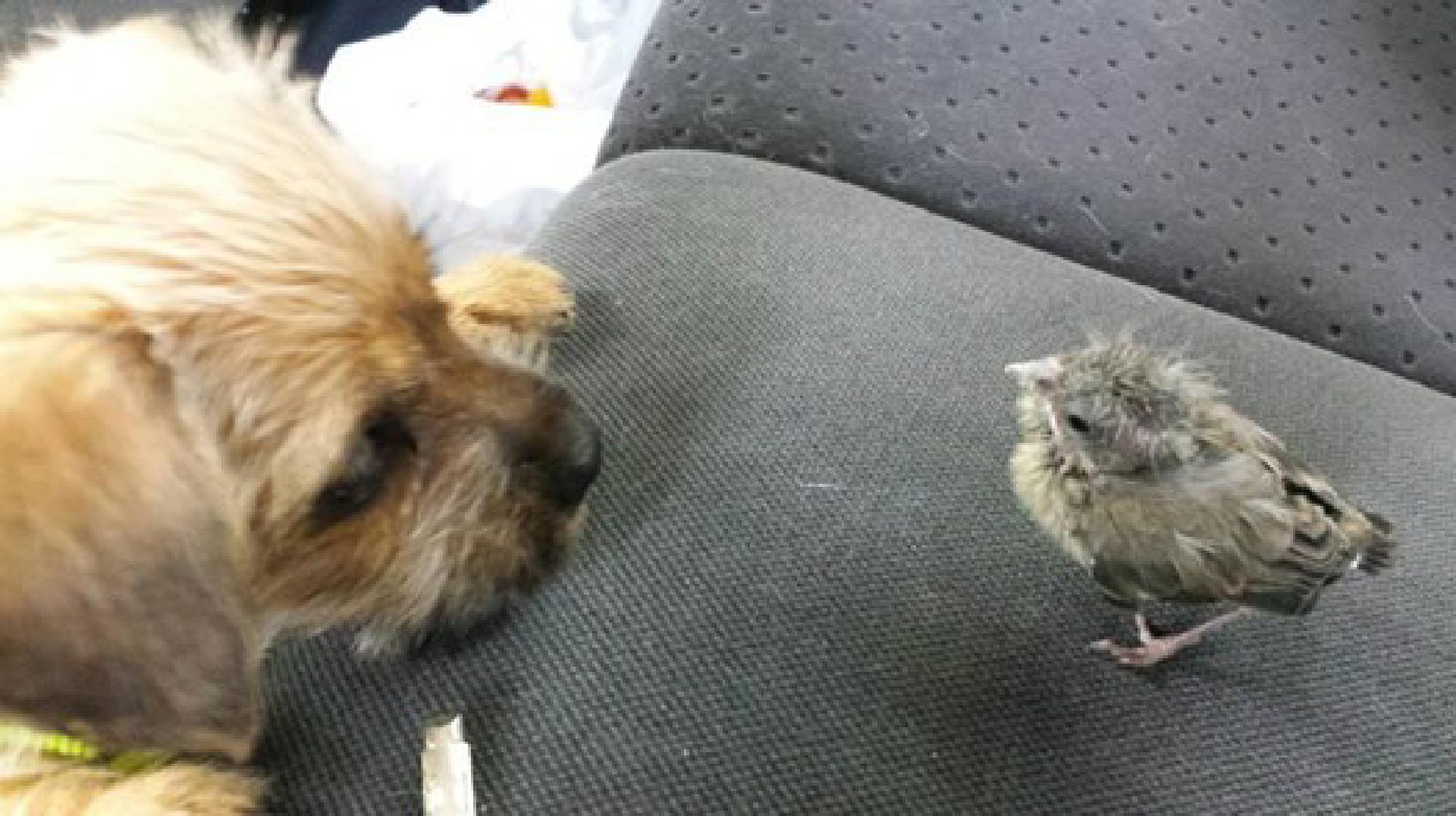Violetta und Freund