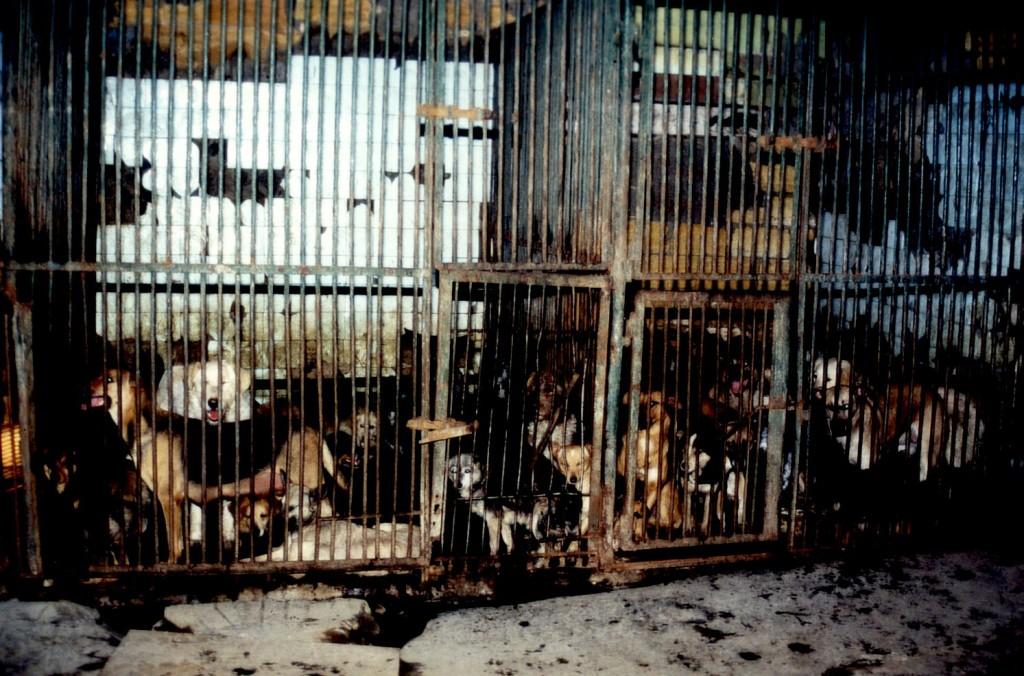 """In der Budka, dem """"Todeshaus"""", starben bis zum Jahr 2001 jährlich rund 10.000 Hunde"""