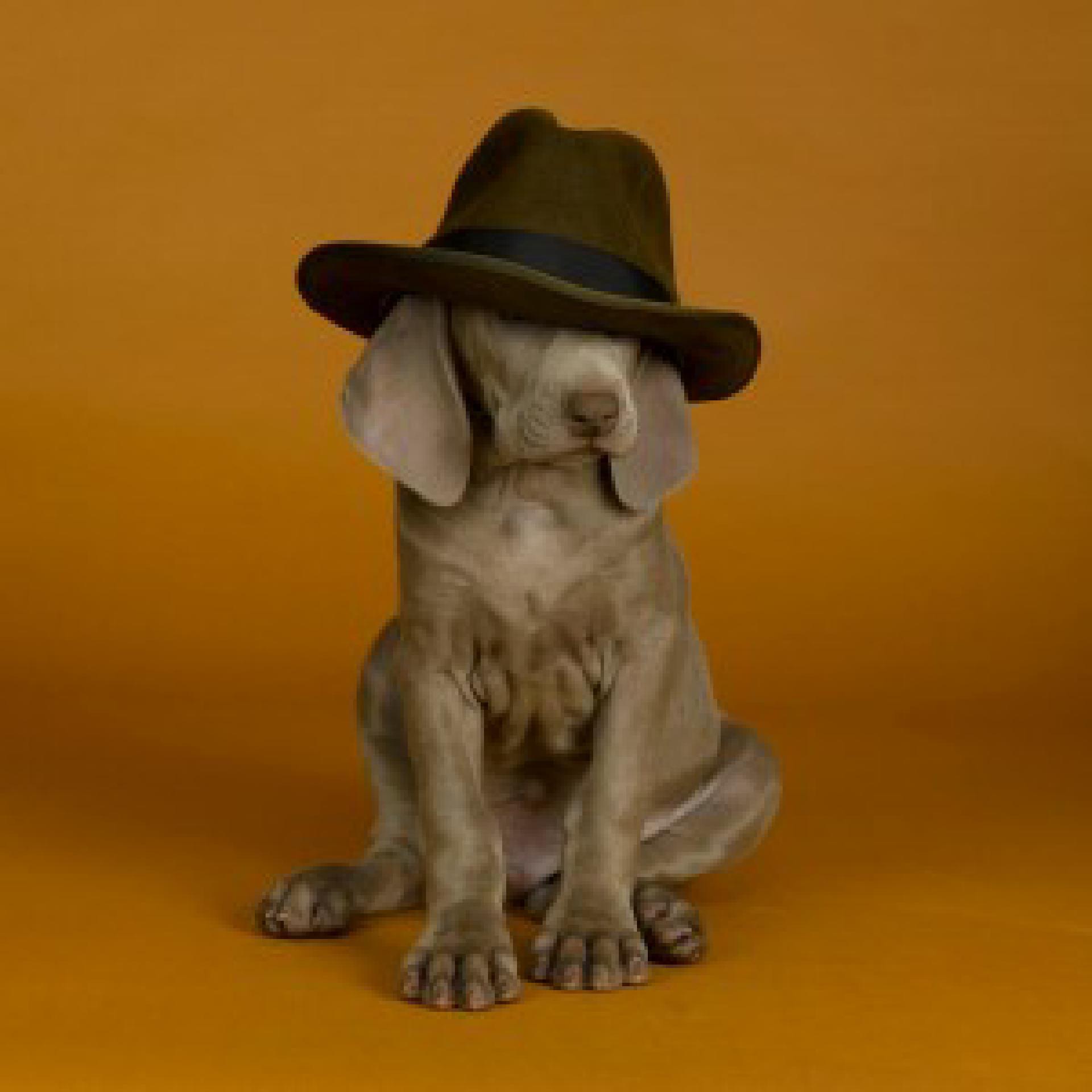 Auch ein Grund, nicht zu kommen: Der Hund sieht nix. Foto: William Wegman