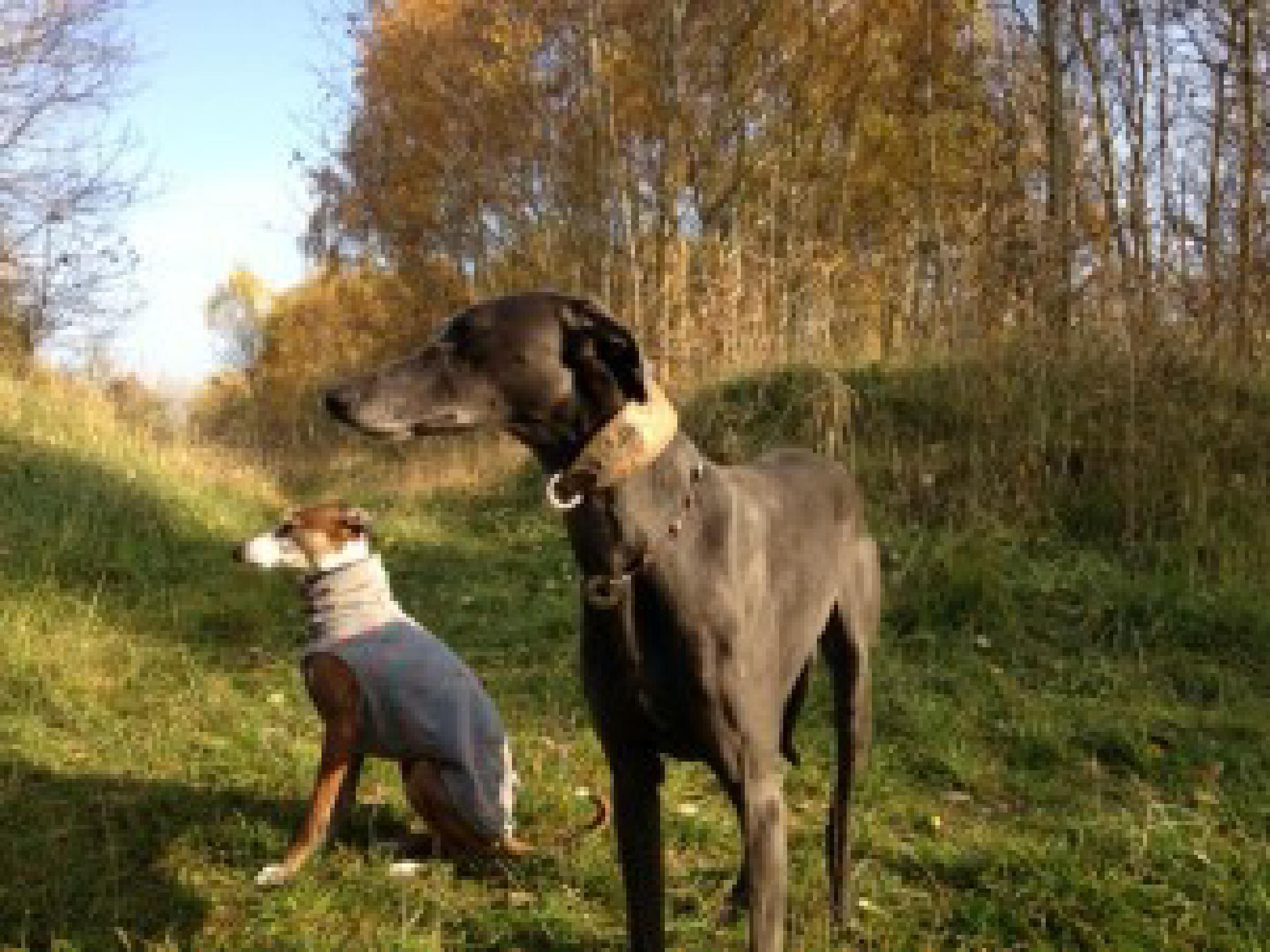 Fritz und Nano beobachten nachdenklich das Renn-Schauspiel von Amali