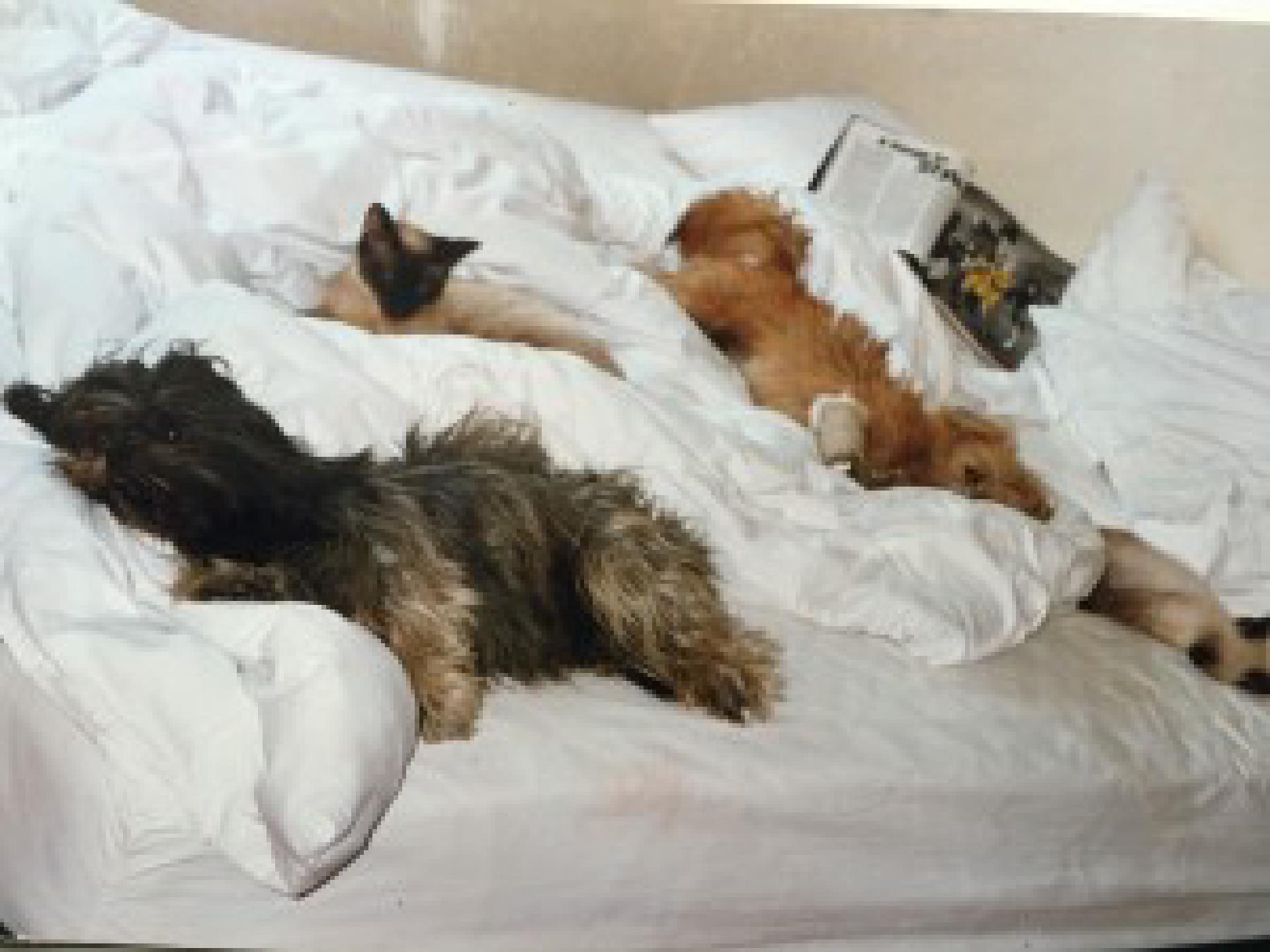 Luna, Bella, Moses und Noah (beide Siamkater stammten aus unserem Müllcontainer in LA)