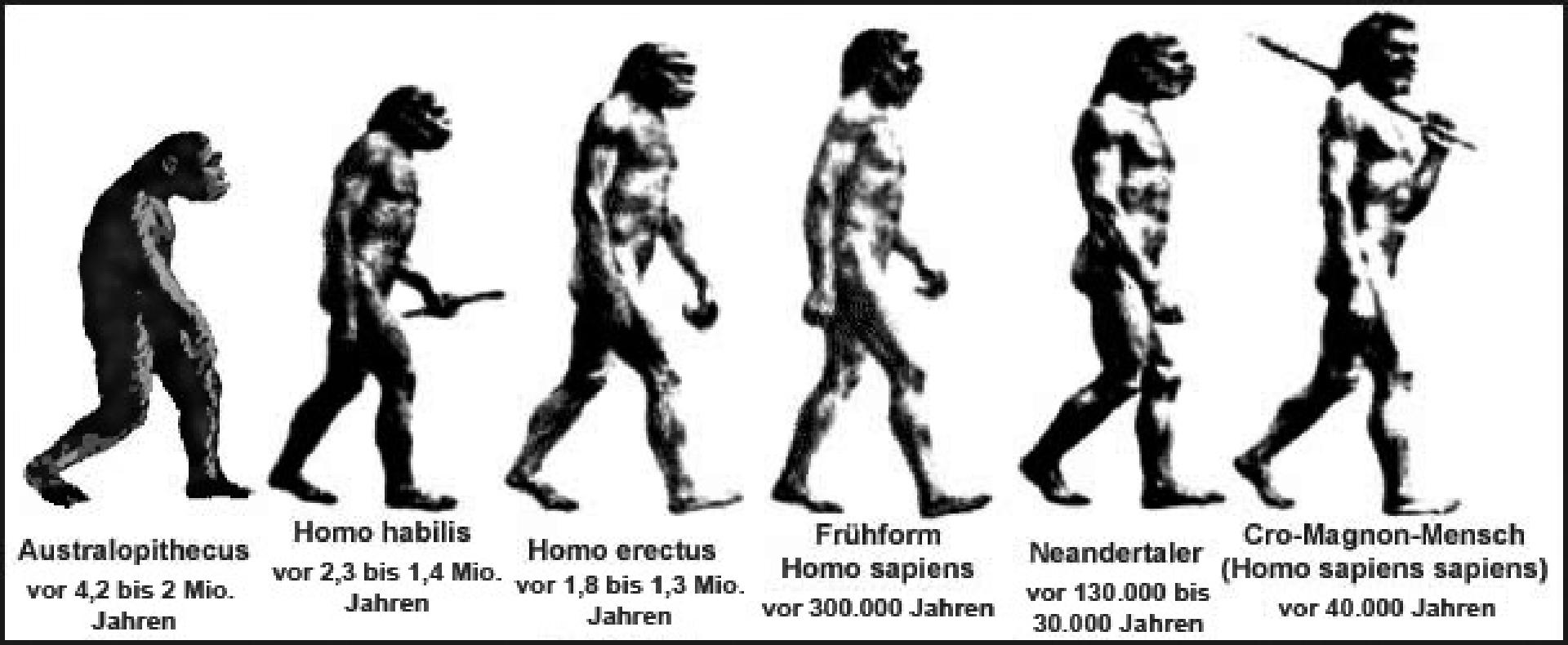 evolution_grafik