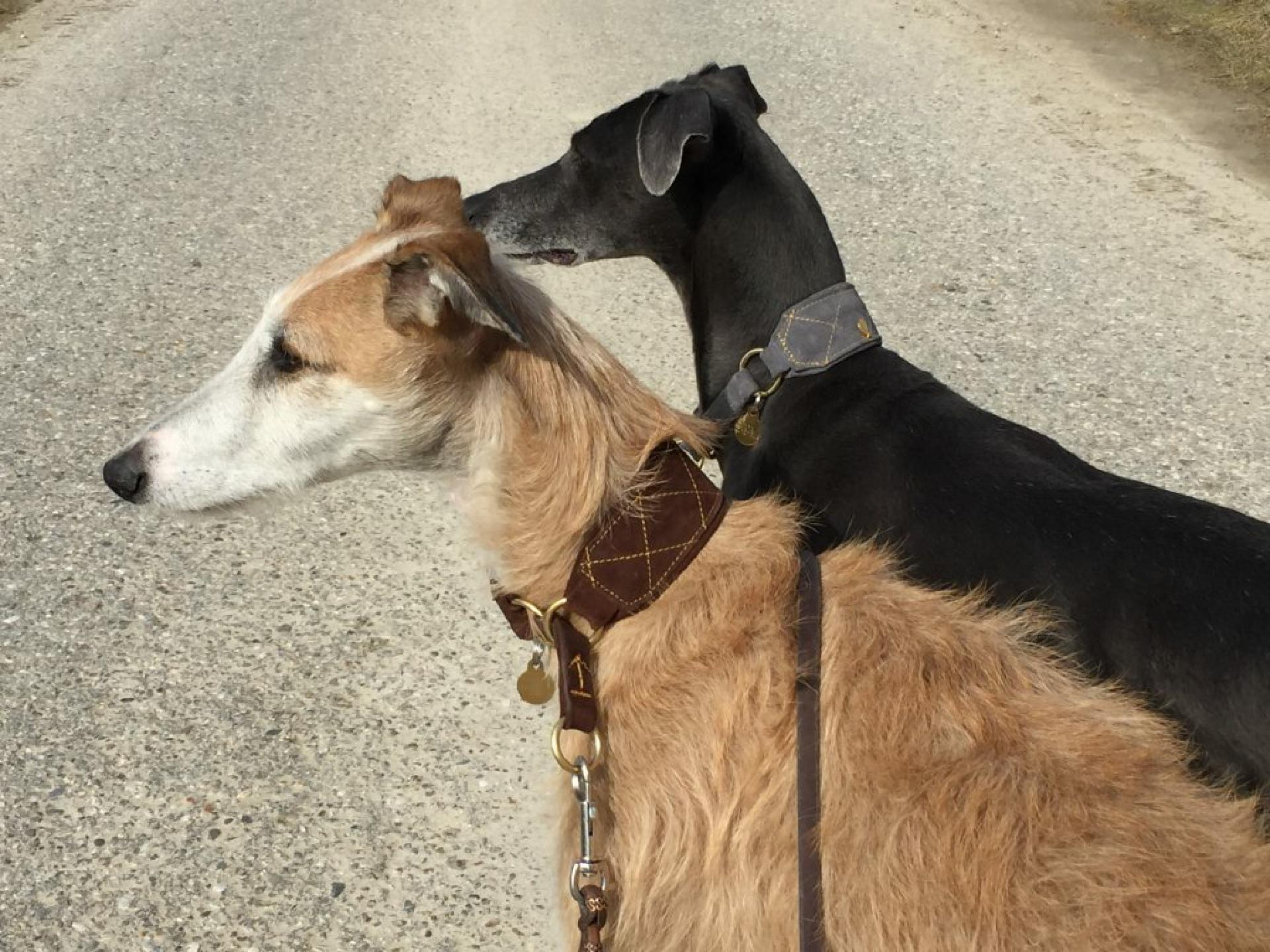 Aslan und Nano (Halsbänder von Leroiy.de)